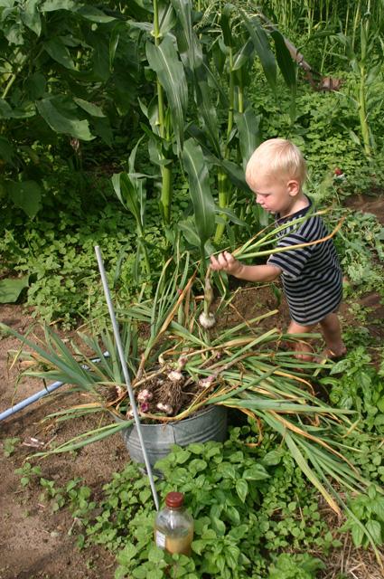 garlic bucket 2011