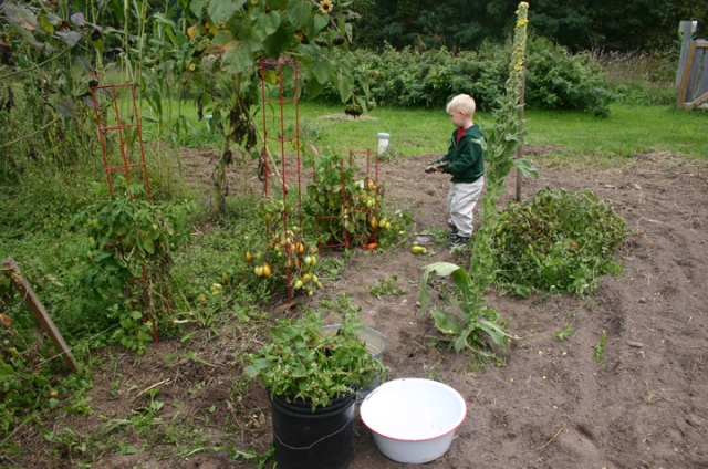 garden work Henry