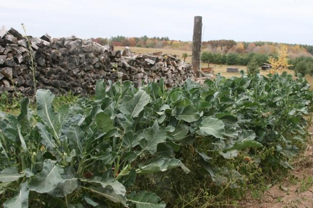 Broccoli 2012