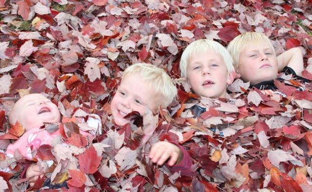 Iverson Park nest
