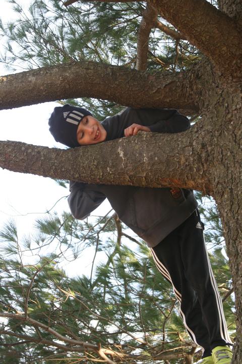Granny's pine Joey