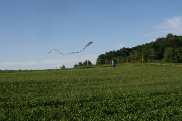 kite in field