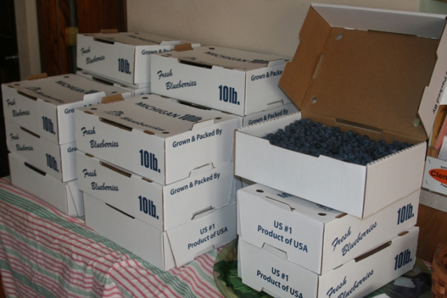 Blueberry boxes 2013