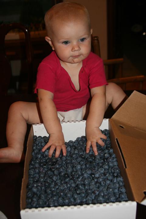 Blueberry Nola Mae 2013