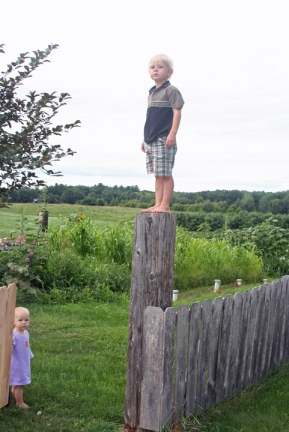 Henry on fence post