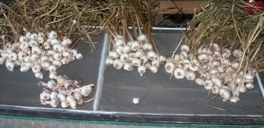 garlic 2013