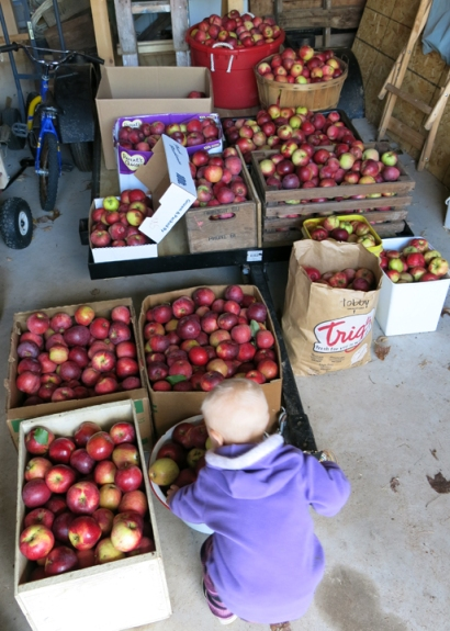 apples in garage 2013
