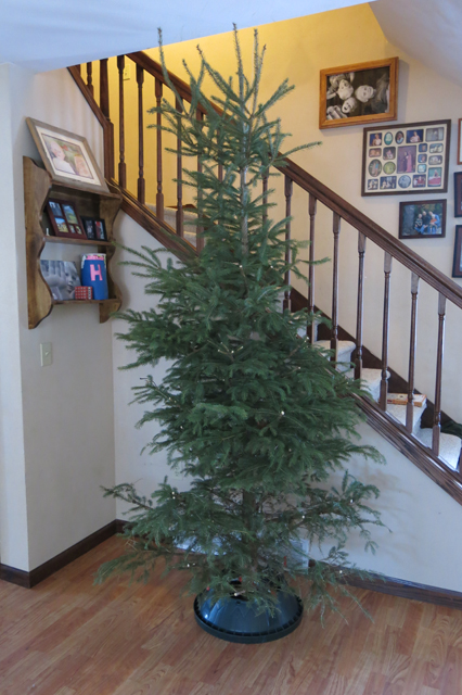 Christmas tree bare