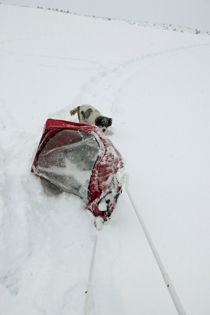 sled tipping on snowshoe trail