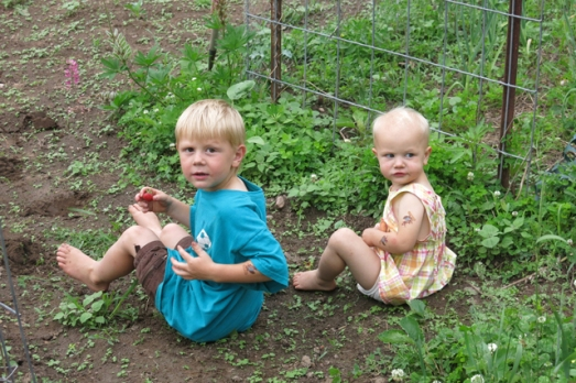 Strawberries Henry & Nola Mae