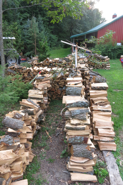 Oak Tree firewood