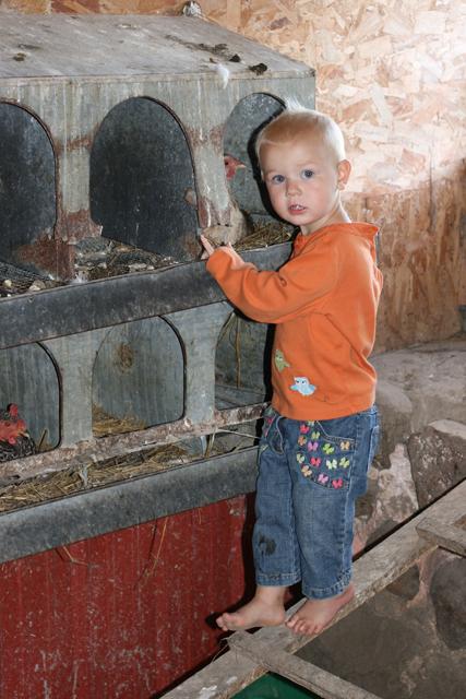 chicken coop Nola Mae