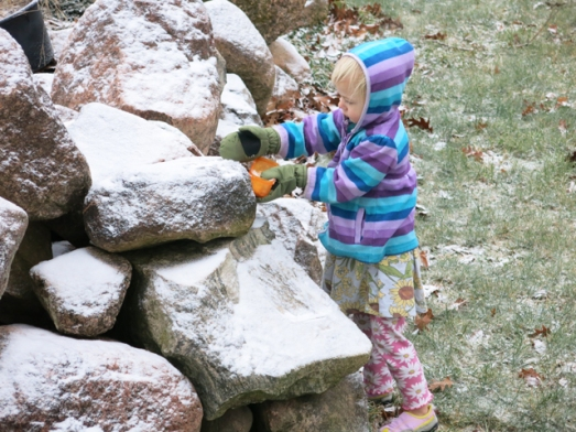 1st snow harvest on rocks