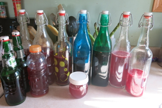 kombucha bottled